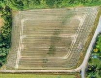 Abstrakt flyg- sikt av ett fält med ungt vete som tas från Arkivfoto