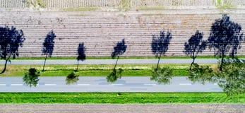 Abstrakt flyg- sikt av träd på kanten av en väg med starkt Royaltyfria Foton