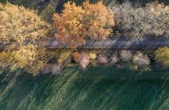 Abstrakt flygbild av höstliga färgade träd, som är i en rak linje bredvid en gata på kanten av ett ängområde Royaltyfria Bilder