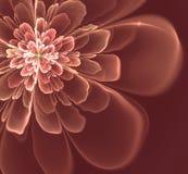 Abstrakt Fractalblomma Arkivfoto