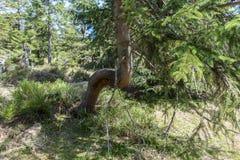 Abstrakt fullvuxet träd i skogen Arkivfoton