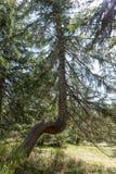 Abstrakt fullvuxet träd i skogen Royaltyfri Bild