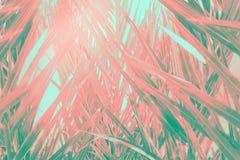 Abstrakt futuristisk tropisk bakgrund Småskog av palmträd med den långa dingla spetsiga sidamodellen Rosa lutning för grön kricka royaltyfri bild