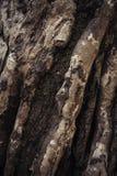 Abstrakt gammal trädstam Royaltyfria Foton