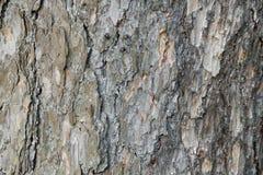 Abstrakt gammal wood bakgrund för textur för trädskäll Royaltyfri Foto