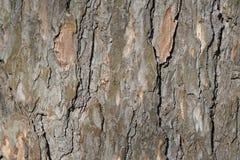 Abstrakt gammal wood bakgrund för textur för trädskäll Fotografering för Bildbyråer