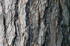 Abstrakt gammal wood bakgrund för textur för trädskäll Arkivfoton