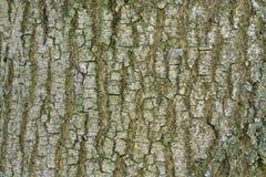 Abstrakt gammal wood bakgrund för textur för trädskäll Royaltyfria Bilder