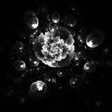 Abstrakt glödande monokrom rosblomma på svart bakgrund Fotografering för Bildbyråer