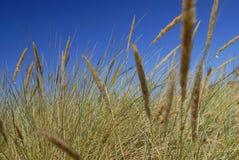 abstrakt gräs Royaltyfria Foton