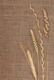 Abstrakt gräs Arkivbild