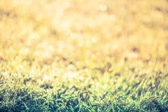 Abstrakt gräs med droppar på naturlig suddig bakgrund utomhus- Royaltyfri Fotografi