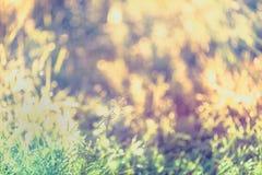 Abstrakt gräs med droppar på naturlig suddig bakgrund utomhus- Arkivfoto