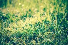 Abstrakt gräs med droppar på naturlig suddig bakgrund utomhus- Royaltyfria Bilder