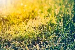 Abstrakt gräs med droppar på naturlig suddig bakgrund utomhus- Arkivfoton