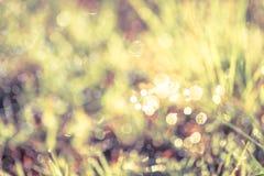 Abstrakt gräs med droppar på naturlig suddig bakgrund utomhus- Fotografering för Bildbyråer