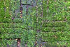 Abstrakt gräsplanmos och kvarterbakgrund Arkivfoto