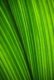 Abstrakt grön bakgrund av bladet för tropisk växt royaltyfri fotografi