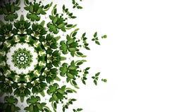 Abstrakt grön bakgrund, lös växt för lian för klättringvinranka med K Arkivbild