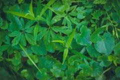 Abstrakt grön bladtextur, bakgrund Royaltyfria Foton