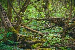 Abstrakt grön bladtextur, bakgrund Royaltyfria Bilder