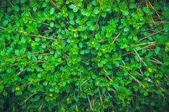 Abstrakt grön bladtextur, bakgrund Arkivfoton