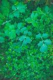Abstrakt grön bladtextur, bakgrund Fotografering för Bildbyråer