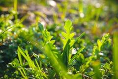 Abstrakt grön bladtextur, bakgrund Royaltyfri Foto