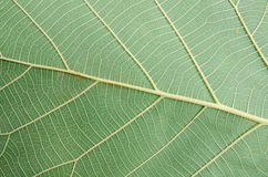Abstrakt grön bladtextur för bakgrund Arkivfoton