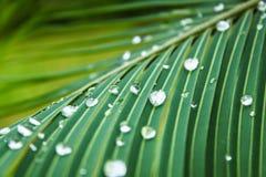 Abstrakt grön bladtextur med vattendroppe Arkivfoton