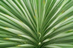 Abstrakt grön bladtexturbakgrund, grönt blad för makro Arkivbilder
