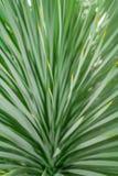 Abstrakt grön bladtexturbakgrund, grönt blad för makro Royaltyfria Bilder