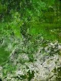 Abstrakt grön gammal vägg Royaltyfri Bild