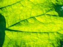 abstrakt grön leaf Arkivfoto