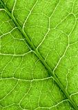 abstrakt grön leaftextur Arkivfoton