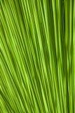 Abstrakt grön naturbakgrund av ett blad Royaltyfri Fotografi