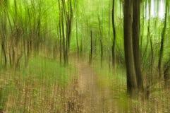 Abstrakt grön skog Royaltyfri Foto