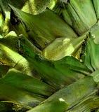 Abstrakt grön stambakgrundstapet Arkivfoton
