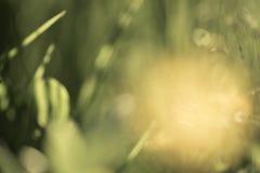 Abstrakt grön suddig bokehbakgrund element för klockajuldesign royaltyfri foto