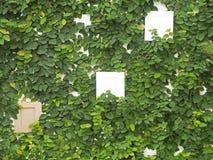 Abstrakt grön vägg med ramen Arkivbild
