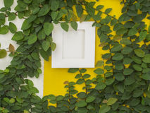 Abstrakt grön vägg med ramen på den vita bakgrunden Royaltyfria Bilder