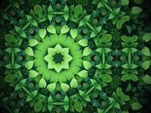 Abstrakt grönskabakgrund, hjärta formade gröna sidor med kal Arkivbilder