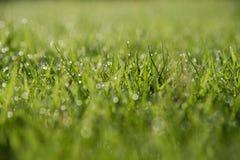 Abstrakt grönt gräs för naturlig bakgrund med en härliga Bokeh Arkivfoto