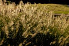 Abstrakt grönt gräs för naturlig bakgrund med en härliga Bokeh Arkivbilder