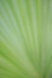 abstrakt green Royaltyfri Fotografi