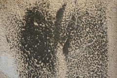 Abstrakt grungebakgrund med den bruna väggen med mörker - gråa fläckar av cementet på yttersidan Arkivfoton