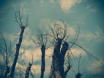 Abstrakt grungebakgrund med konturn av trädet Arkivbild