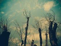 Abstrakt grungebakgrund med konturn av trädet Fotografering för Bildbyråer