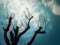 Abstrakt grungebakgrund med konturn av trädet Arkivbilder