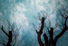 Abstrakt grungebakgrund med konturn av trädet Royaltyfri Fotografi